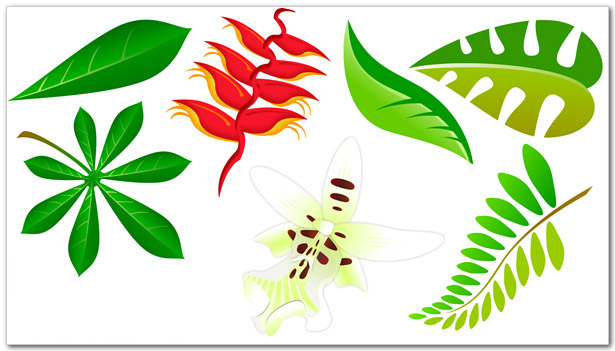 Leaves - Komodo Media